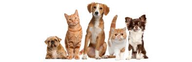 کرونا و حیوانات خانگی